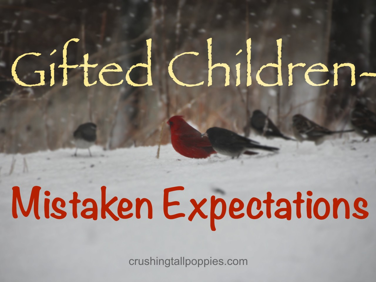 Gifted Children--Mistaken Expectations