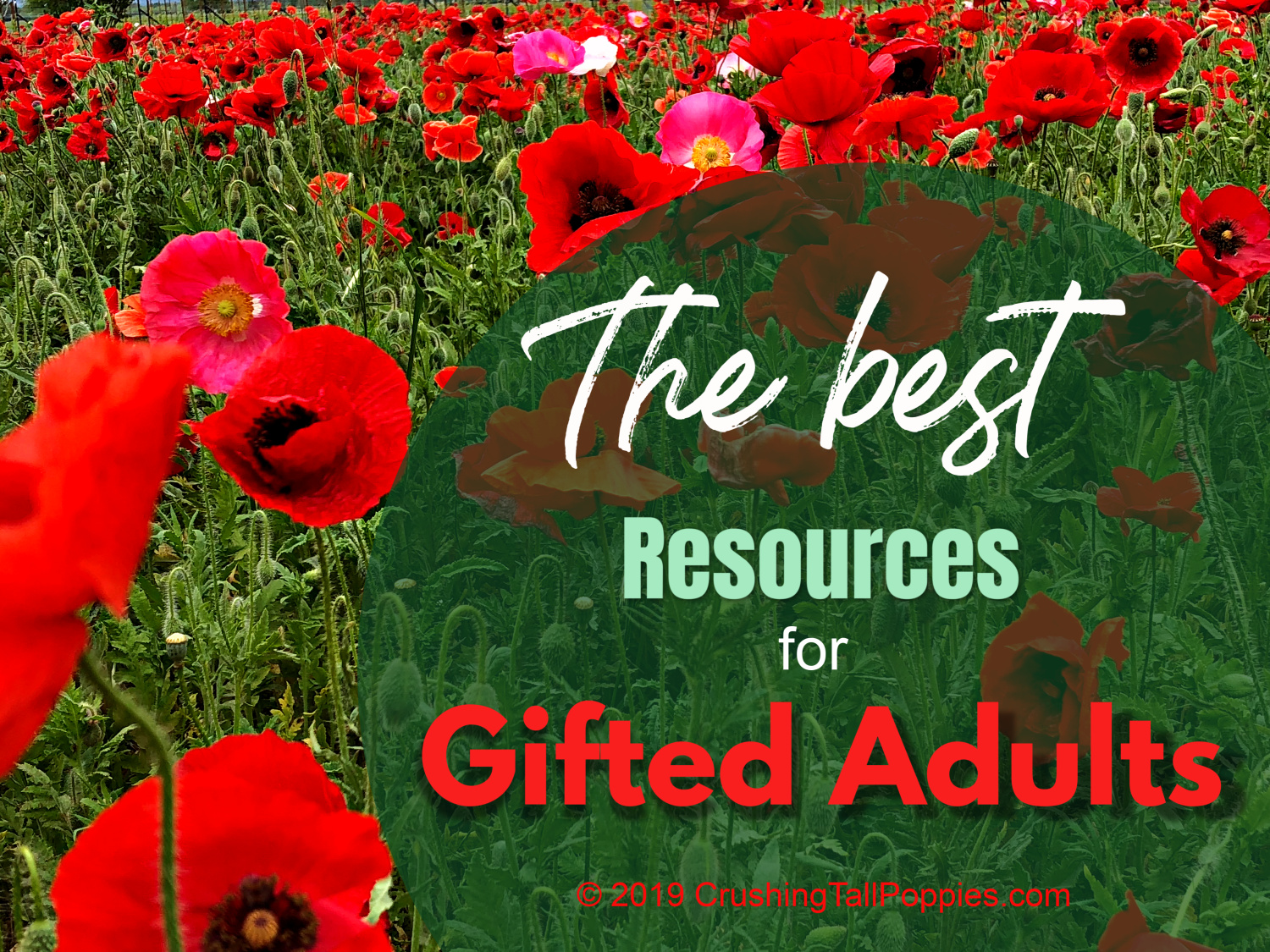 Why So Many Gifted Yet Struggling >> The Best Resources For Gifted Adults Crushing Tall Poppies